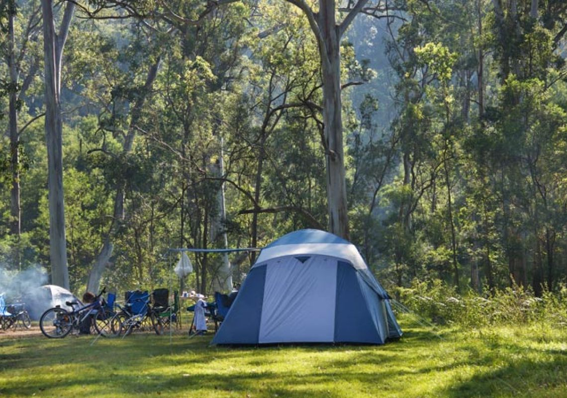 Tent and bicycles in the Redgum section of Euroka campground, Blue Mountains