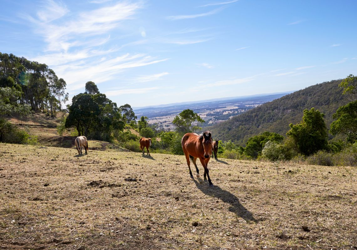 Horse riding - Hunter Valley - Hunter