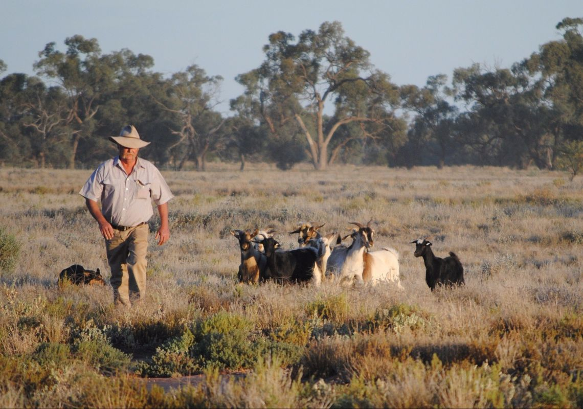 Goat Trials at the Pooncarie Field Day in Pooncarie, The Murray
