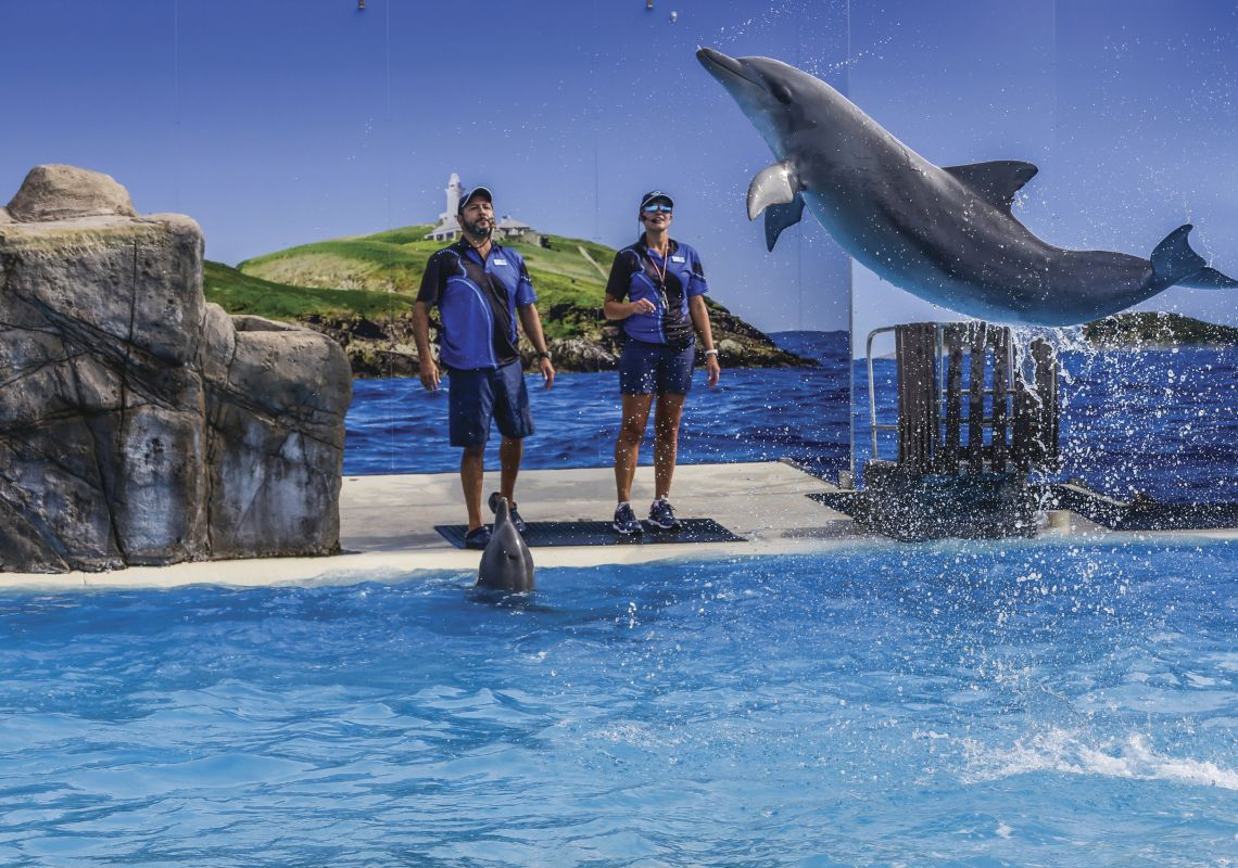 Trainers and dolphins during a performance show at Dolphin Marine Conservation Park in Coffs Harbour, North Coast