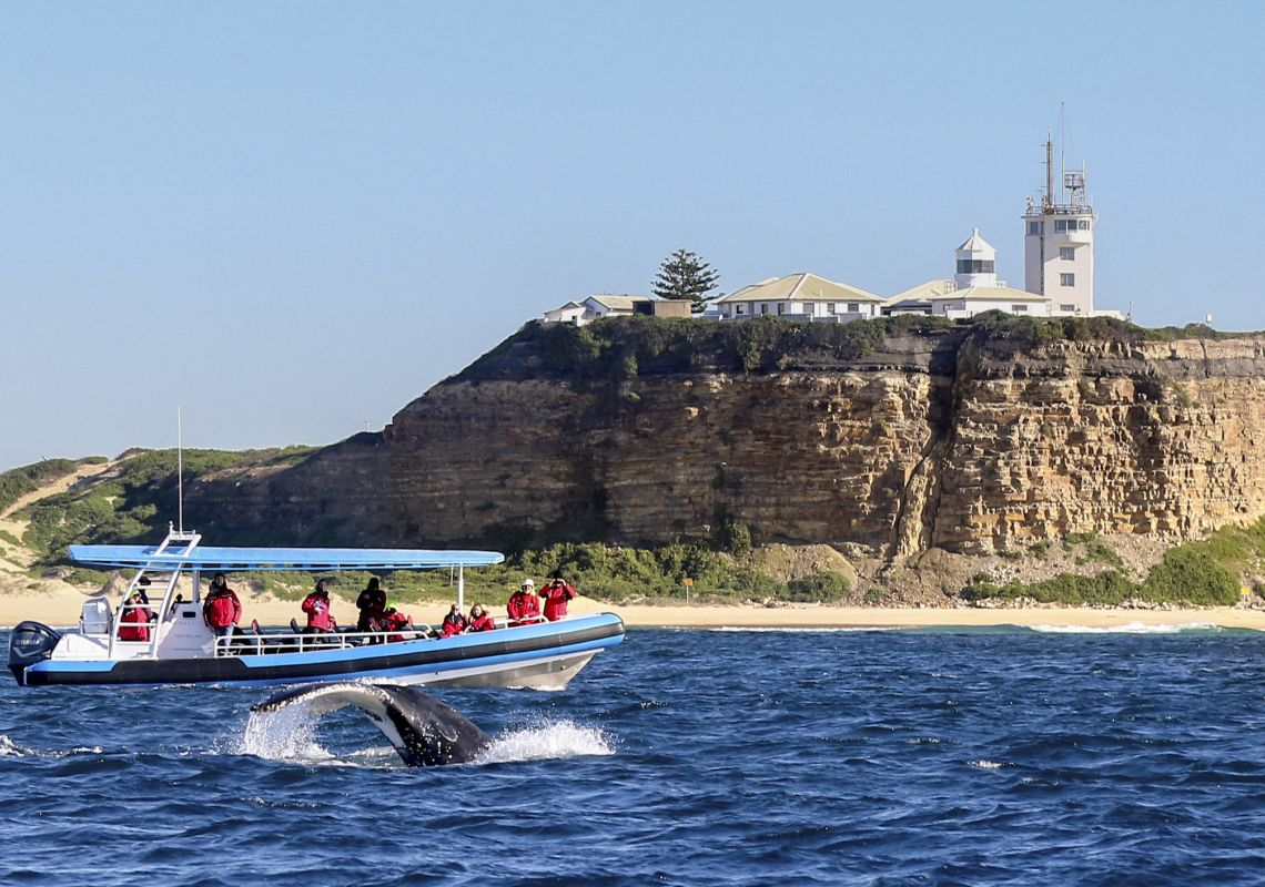 People on a CoastXP tour watching a humpback whale slaps its tail off the Newcastle coastline
