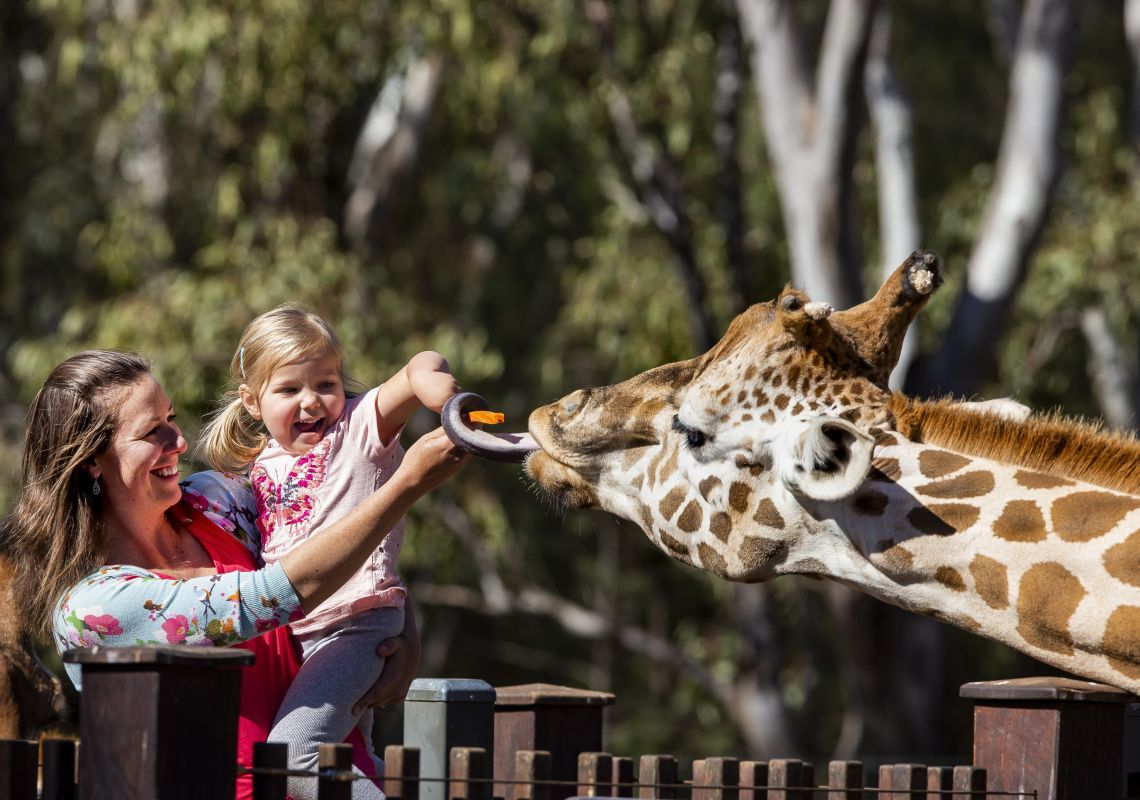 Mother and daughter enjoying the giraffe encounter at Taronga Western Plains Zoo in Dubbo, Country NSW
