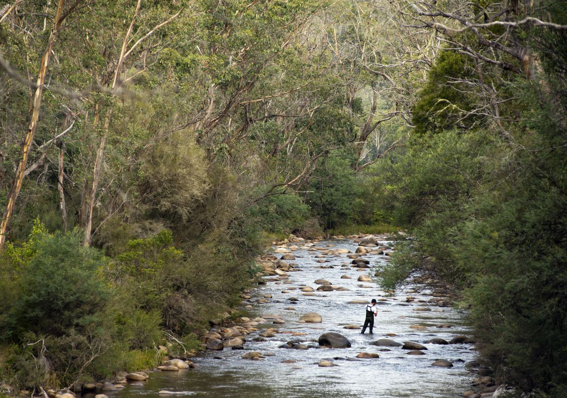 Man enjoying a day of fly fishing in Swampy Plains River, Kosciuszko National Park.