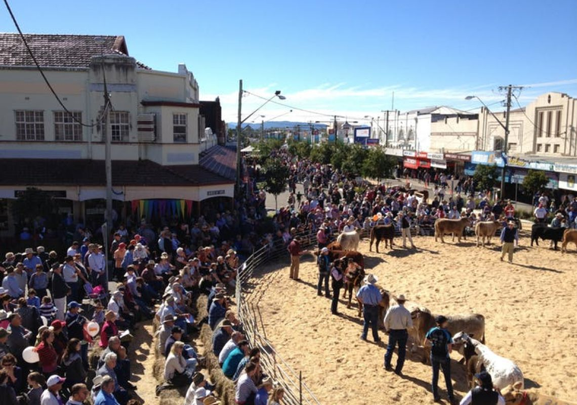 Casino Beef Week Main Saturday - Cattle Ring in Casino,  Lismore Area