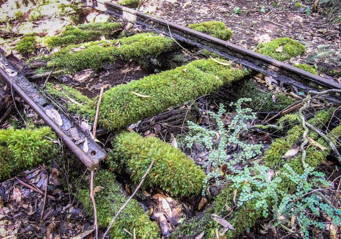 Wootton Historical Railway Walk at Wootton in Forster & Taree, North Coast
