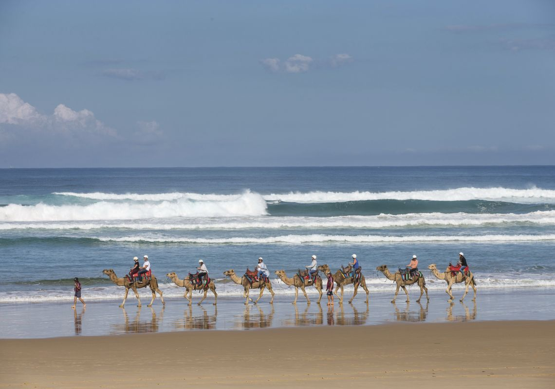 Conference delegates enjoying a camel ride at Anna Bay with Oakfield Ranch Camel Rides in Port Stephens, North Coast