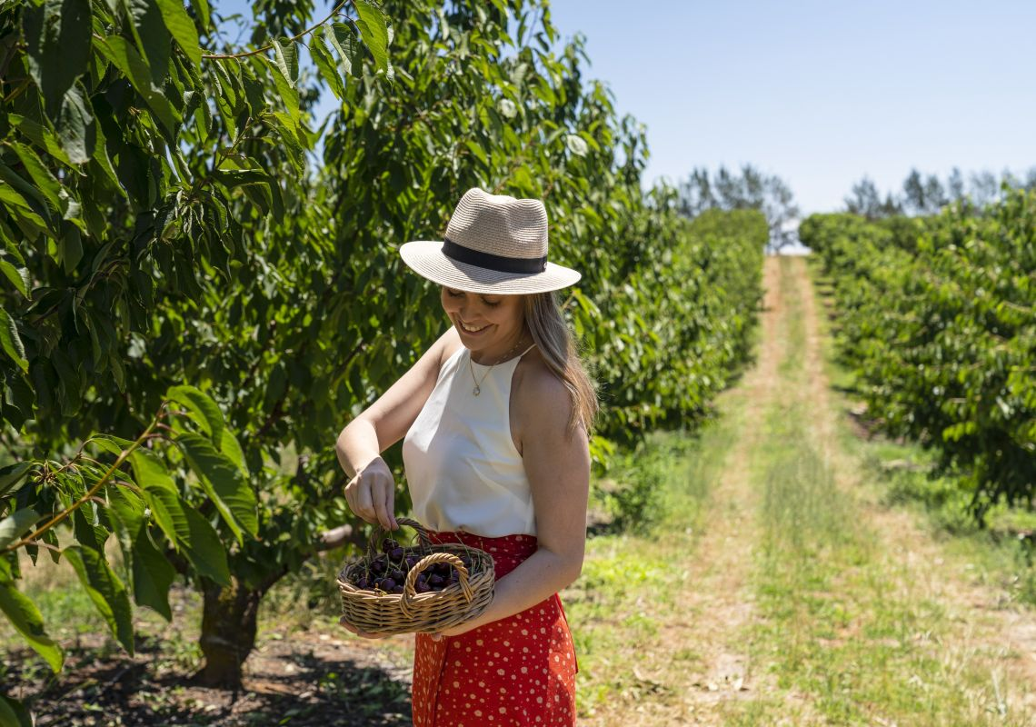 Woman enjoying a day of cherry picking at Valley Fresh Cherries & Stonefruits in Young, Country NSW