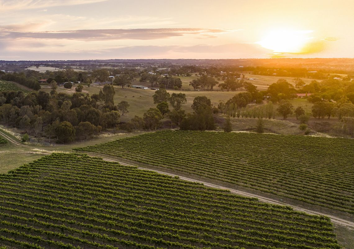 Sun setting over the scenic grounds of Grove Estate Wines in Young, Country NSW