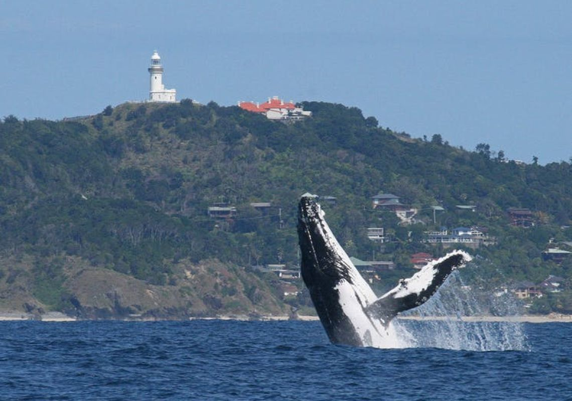 Whale Watching Byron Bay tour in Byron bay, North Coast