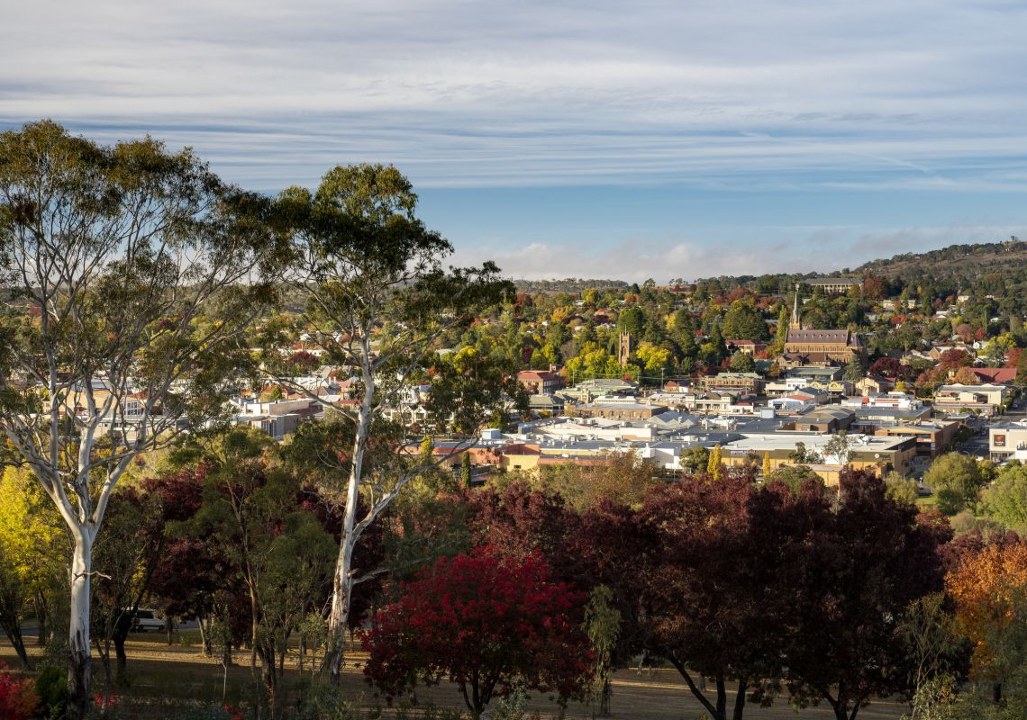 Autumn leaves across the city of Armidale, Country NSW
