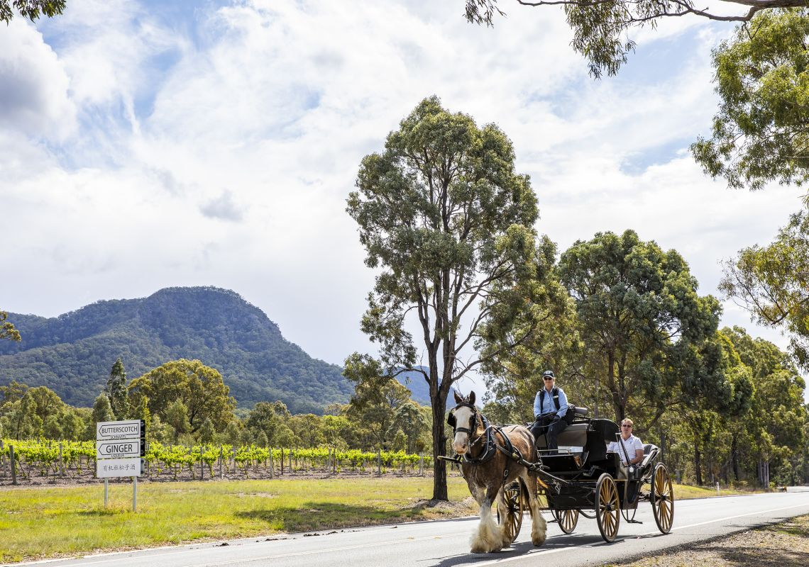 Horse drawn carriage through the Hunter Valley