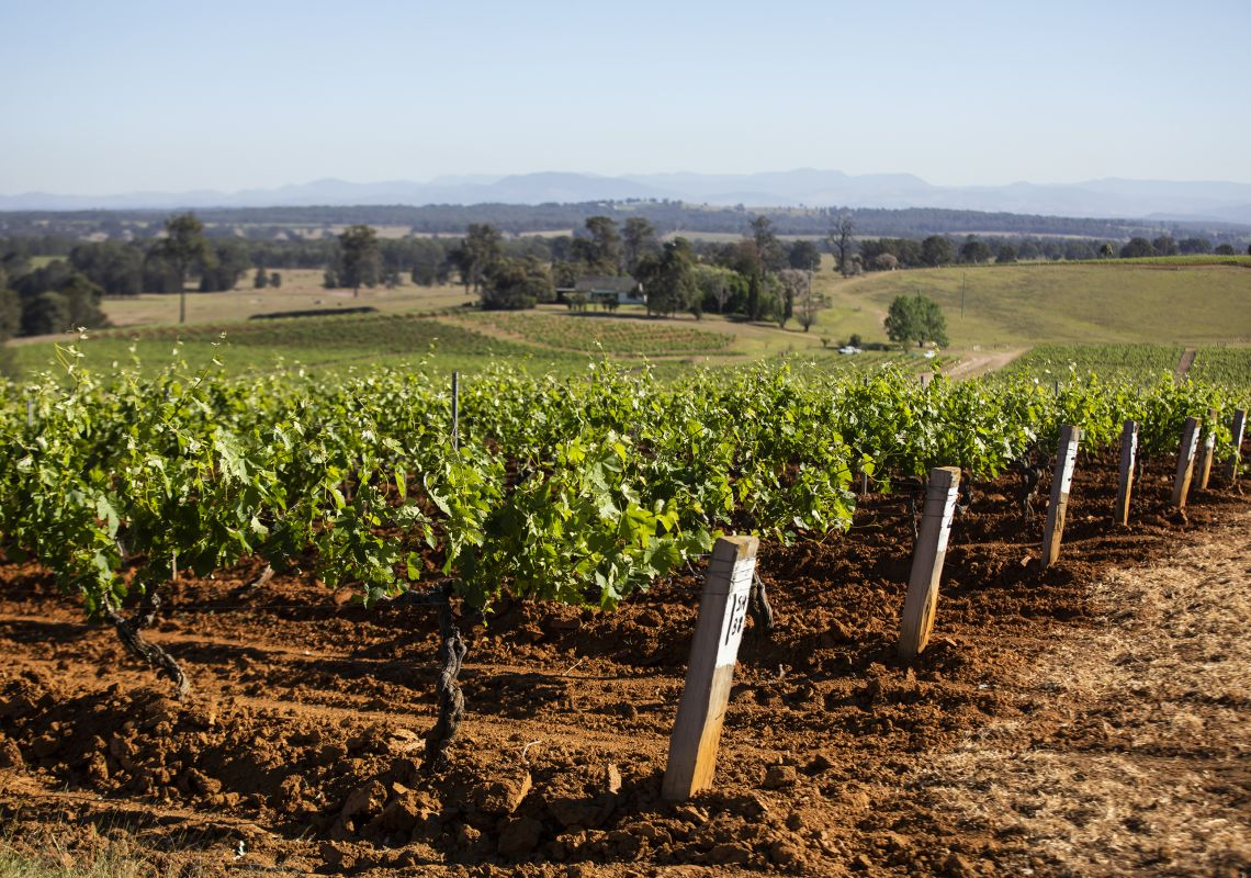 Tyrell's Wines - Pokolbin, Hunter Valley
