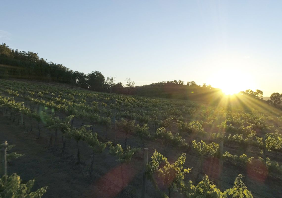 Sun rising over the Rosby Wines vineyard in Eurunderee near Mudgee, Country NSW