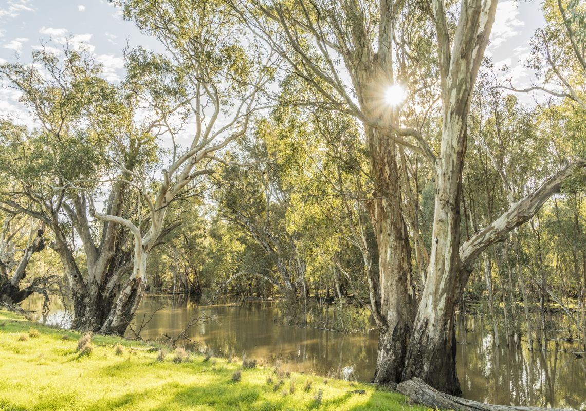 Scenic country views of the Murrumbidgee River in Darlington Point, Riverina