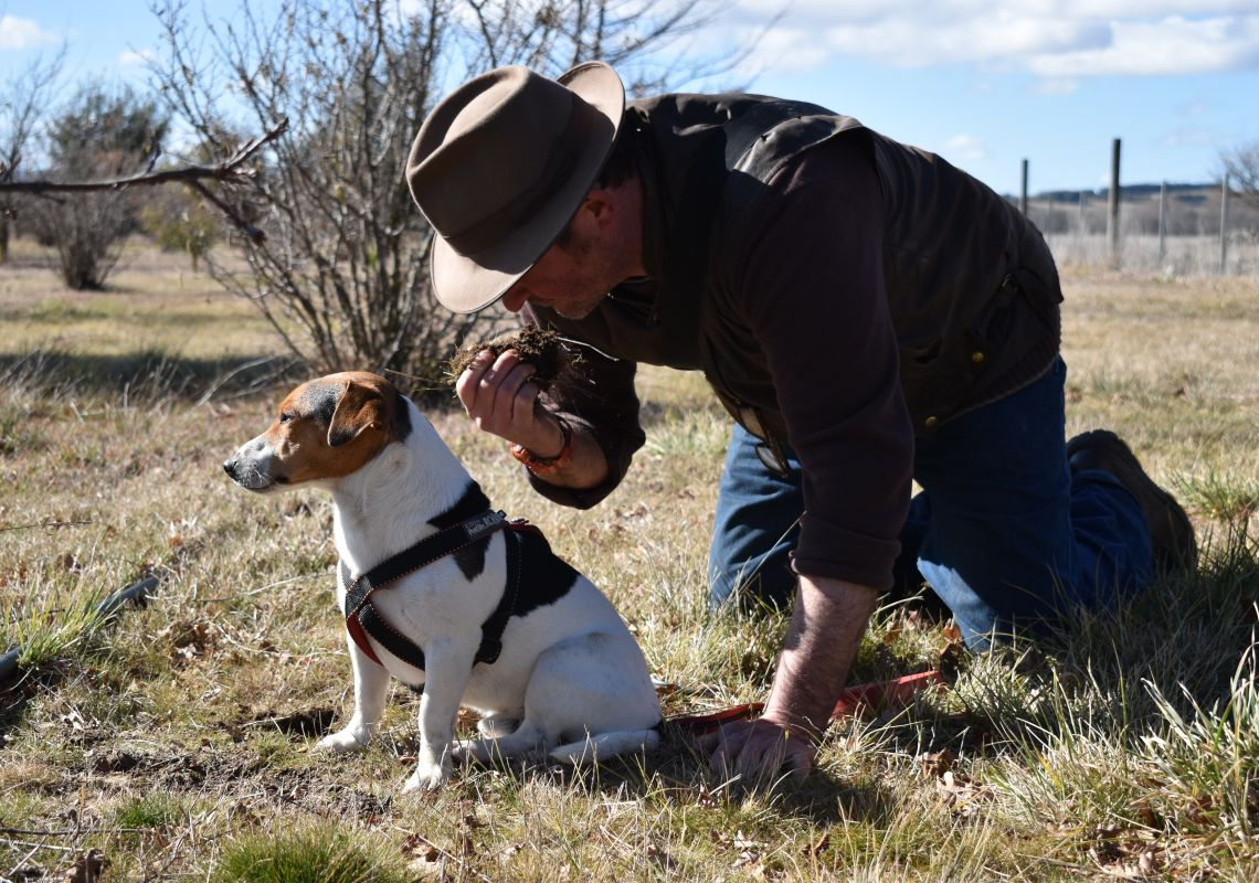Smelling the earth in search of the Truffle in Bungendore, Queanbeyan Area, Country NSW