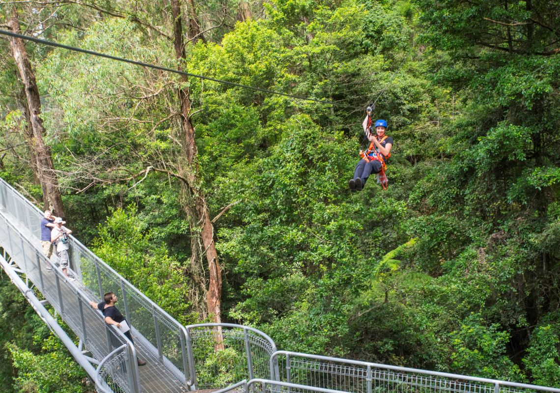 Guide zipping through the scenery at Illawarra Fly Treetop Adventures, Knights Hill in the Illawarra, South Coast