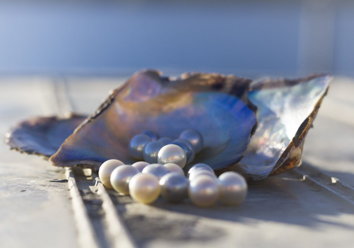 Australian Pearl Farm Tour - Killcare - Central Coast