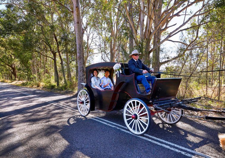 Horse and Carriage in the Hunter Valley