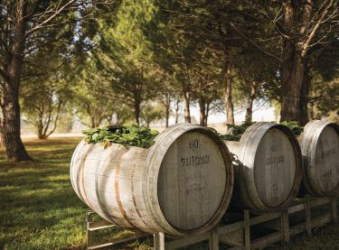 Barrels in Lowe Wines - Mudgee, Country NSW