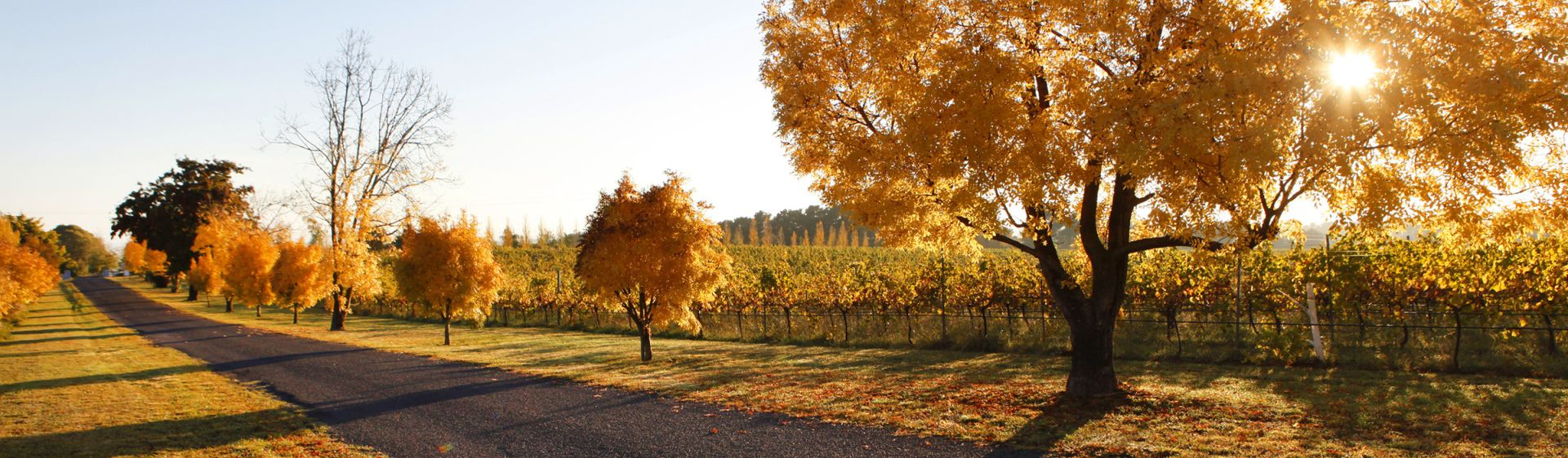 Country NSW - Towns, Events & Things to Do