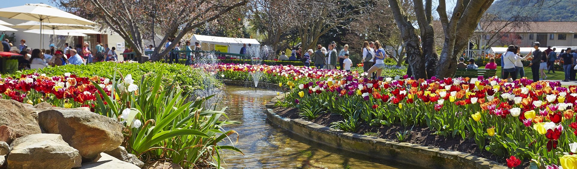 Tulip Time Festival in full bloom in Corbetts Garden, Bowral