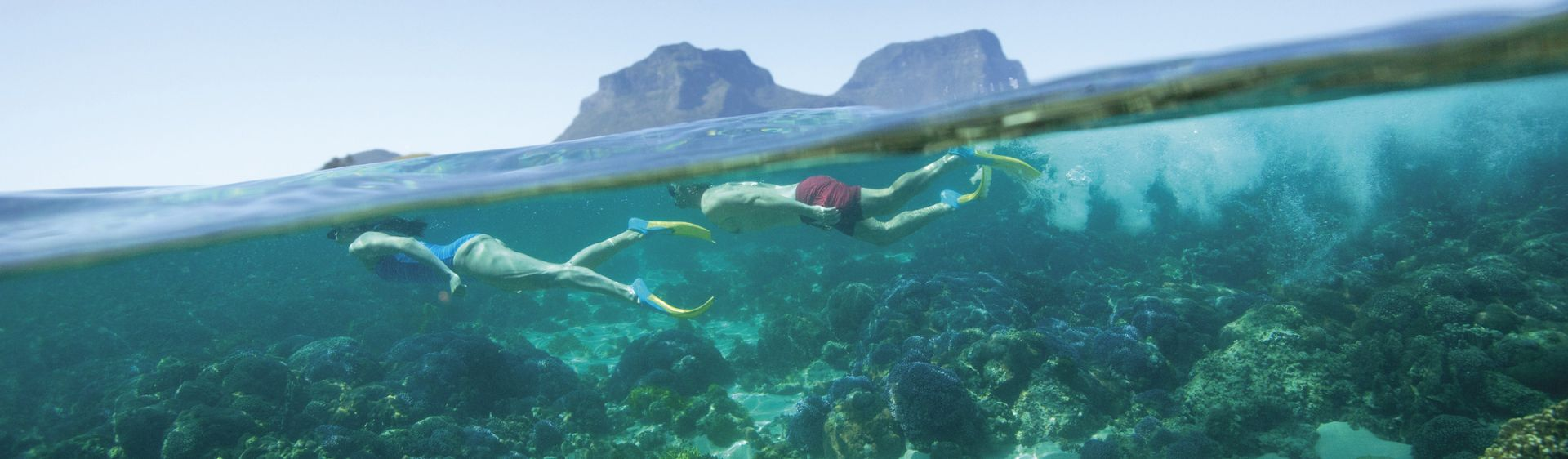 Snorkelling at Lord Howe Island