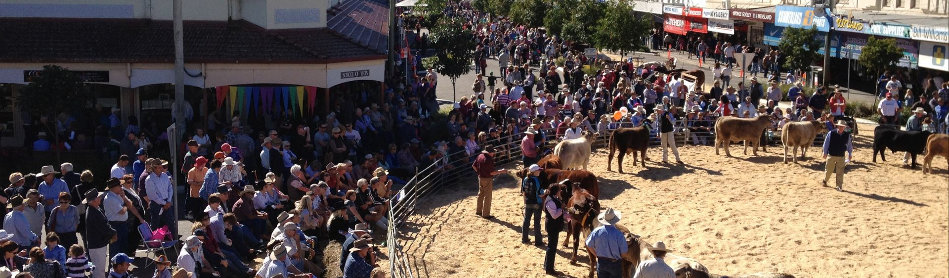Cattle Ring at Casino Beef Week Festival