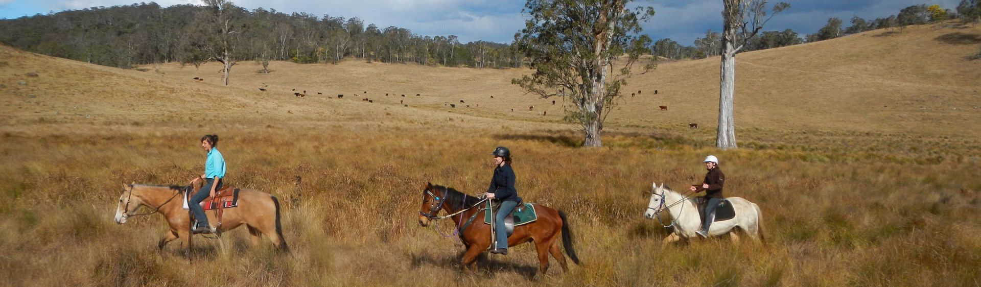 Chapman Valley Horse Riding - Singleton - Hunter Valley