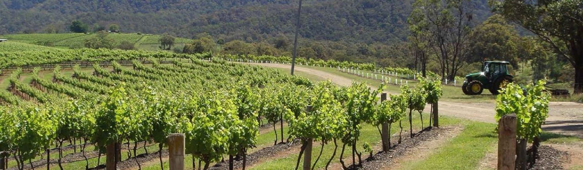 A vineyard in Wollombi, nestled in the beautiful Hunter region
