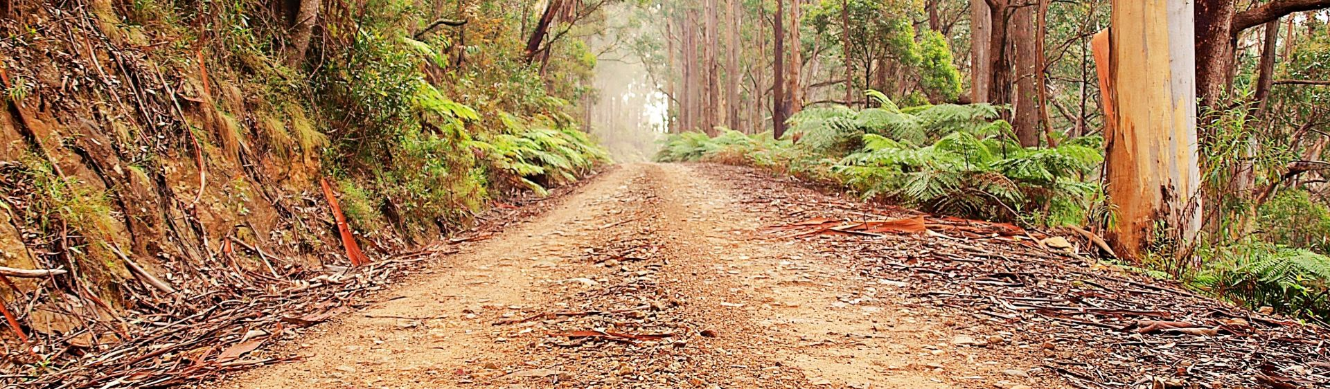 Cycle Mogo State Forest - Mogo - Batemans Bay and Eurobodalla