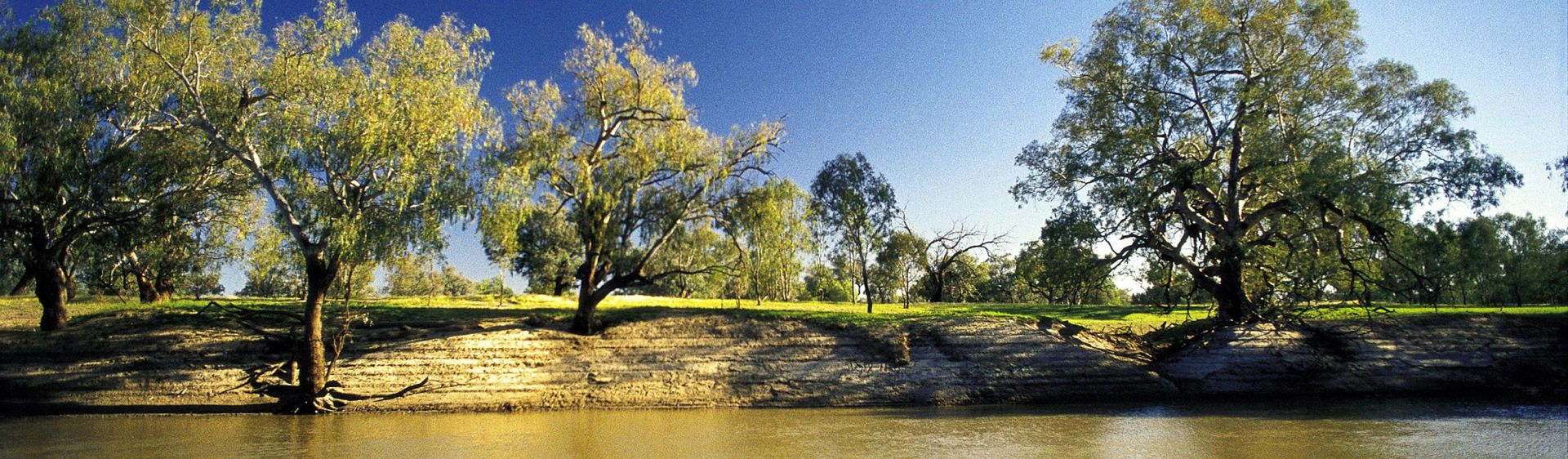 Trees lining the banks of the Darling River - Outback NSW