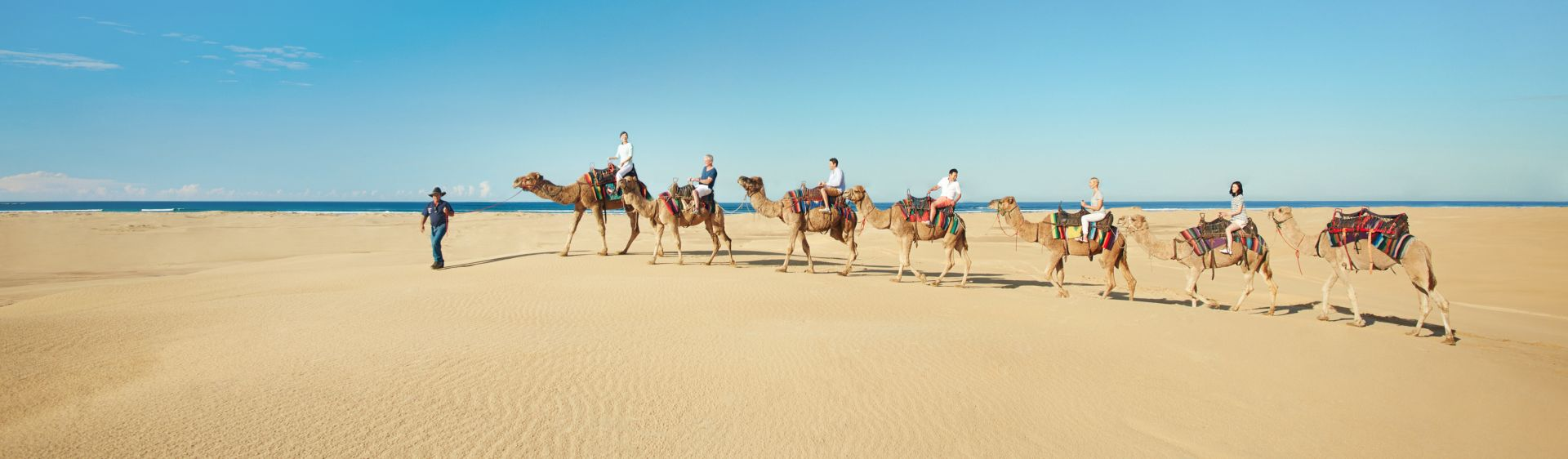 Camel rides on the Stockton Bight sand dunes, Port Stephens, Australia