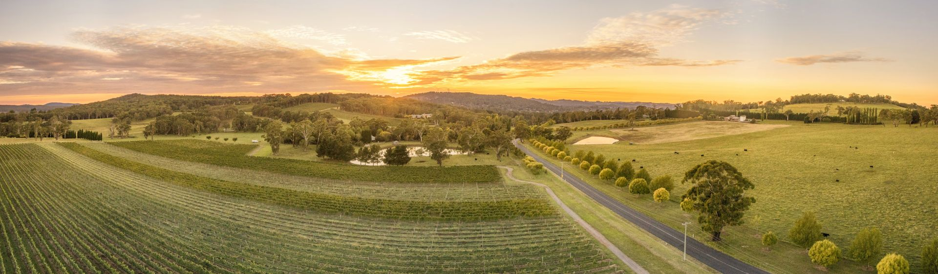 Sunrise over the Centennial Vineyards, near Mittagong, Southern Highlands