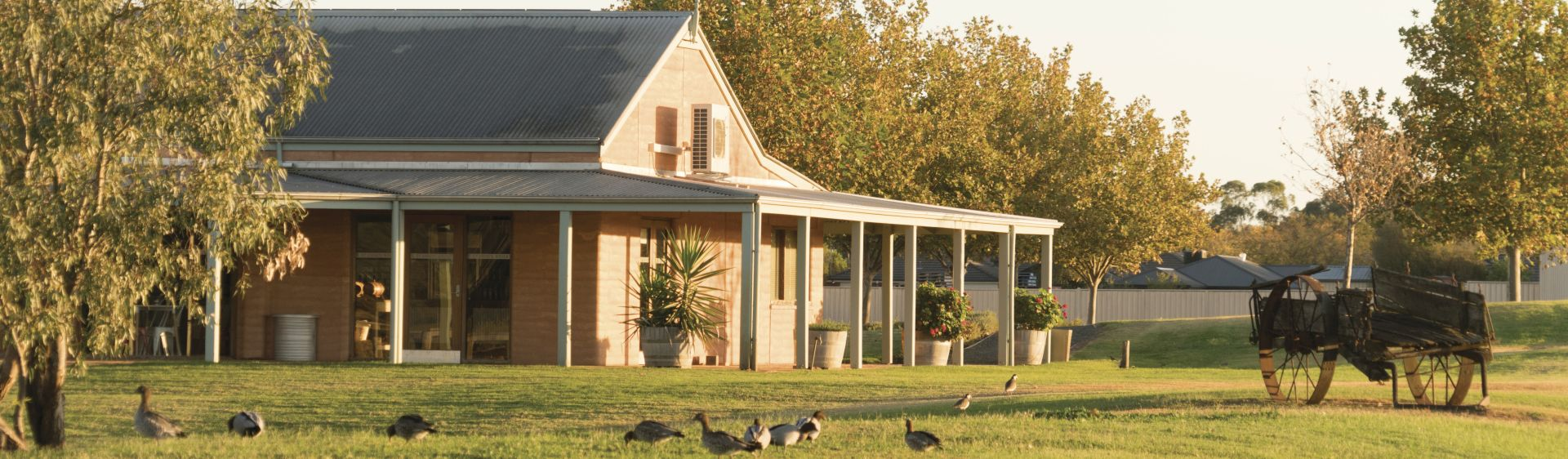 Ducks grazing on the lawns at St. Anne's Winery, Moama