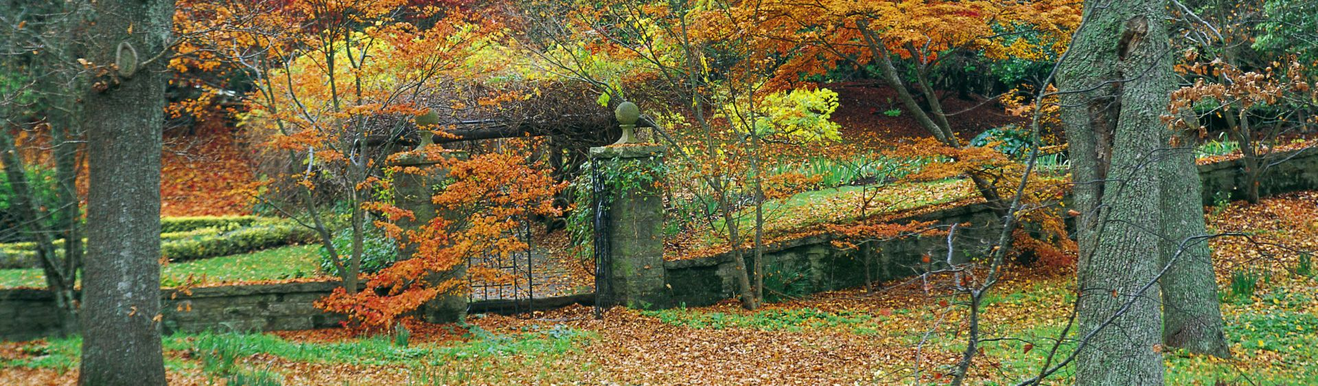 Picturesque garden in Autumn, Moss Vale, Southern Highlands
