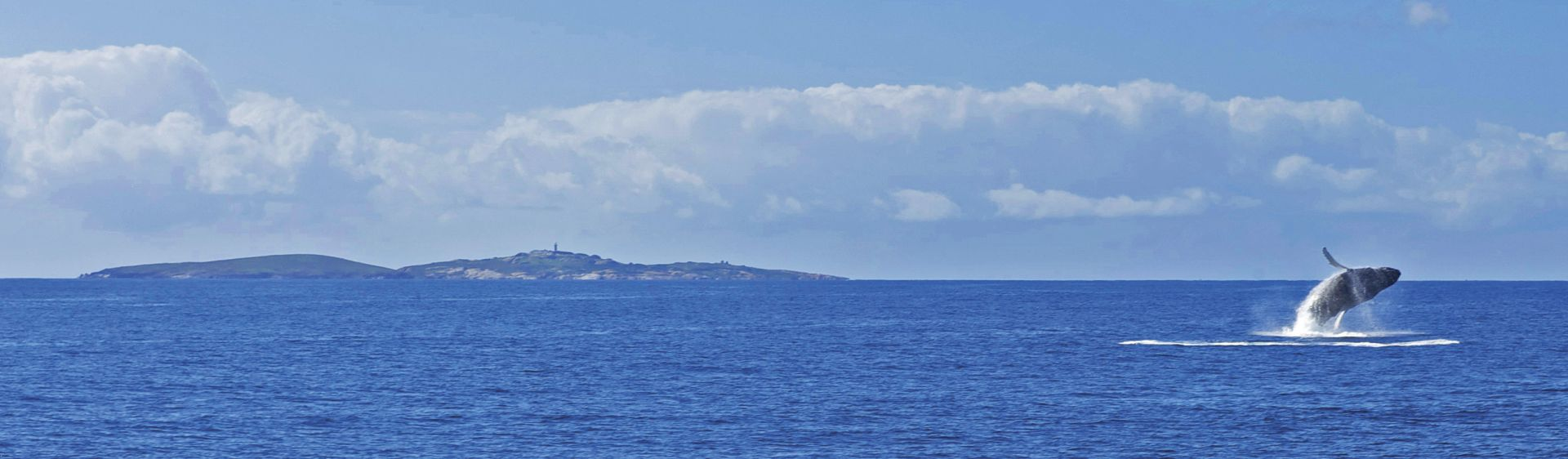Whale Watching in Narooma, South Coast