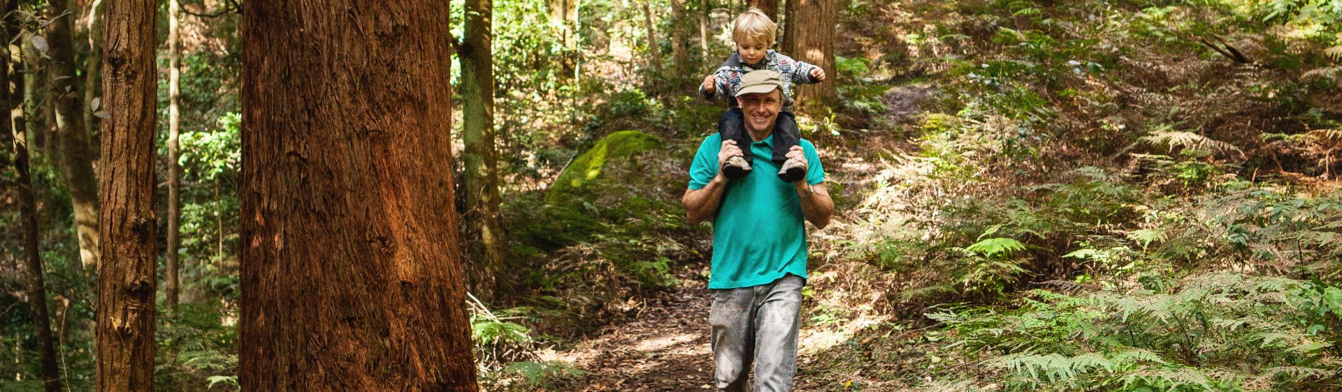 Bushwalking in Macquarie Pass National Park, Shellharbour