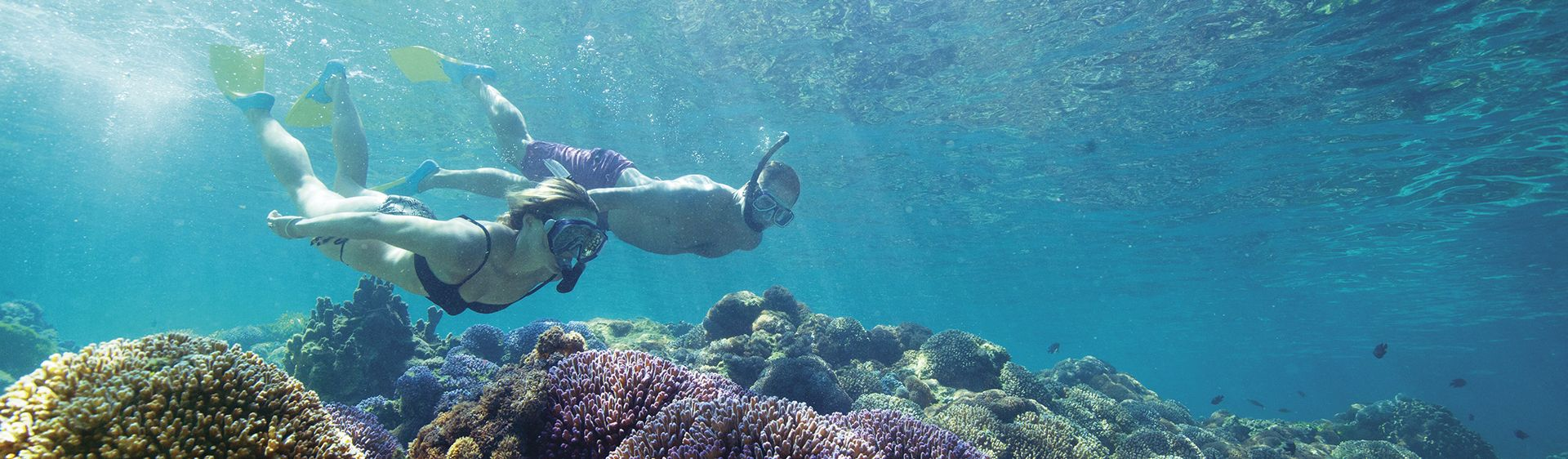 Couple snorkelling over luxuriant coral off Lord Howe Island