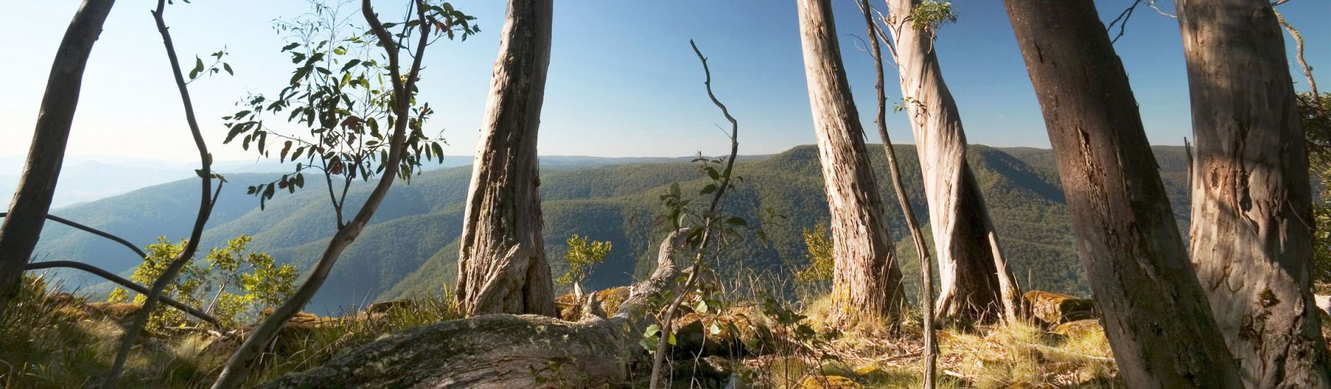 View through trees at Thunderbolts Lookout, Barrington Tops National Park, NSW, Australia