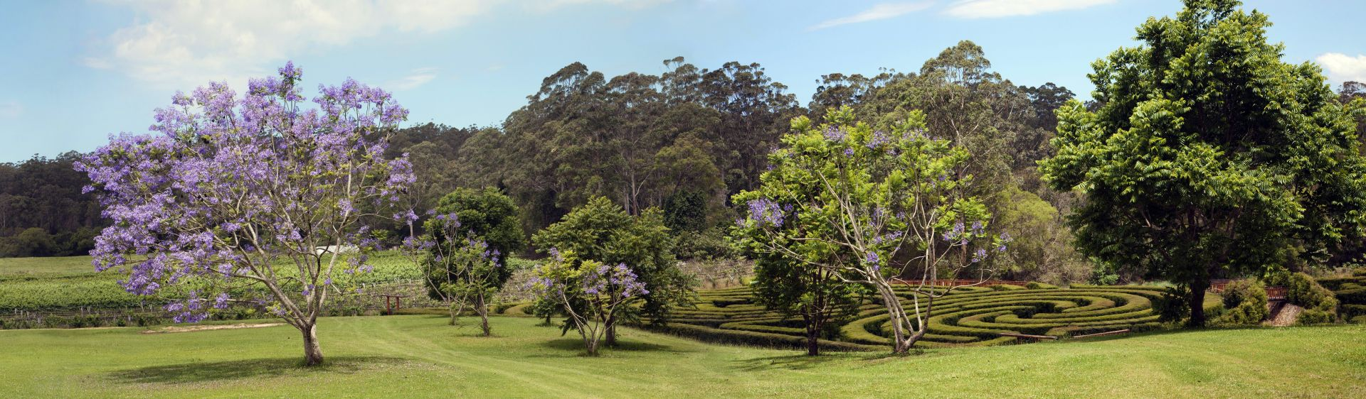 The Bago Maze at the Bago Maze and Winery in Wauchope, NSW, Australia
