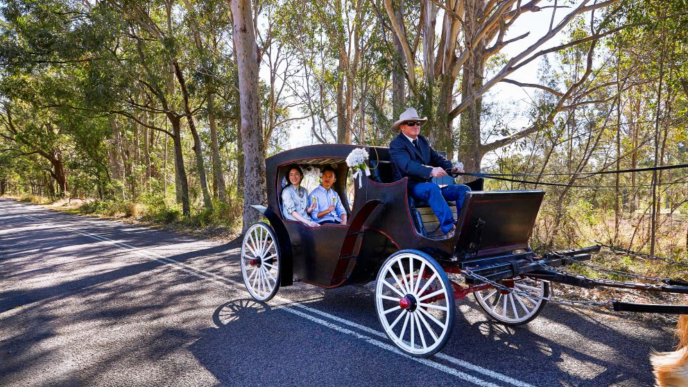 Horse and Carriage ride in the Hunter Valley