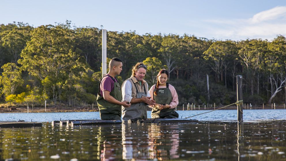 Couple enjoying a tour with Captain Sponge's Magical Oyster Tours on Pambula River, Pambula
