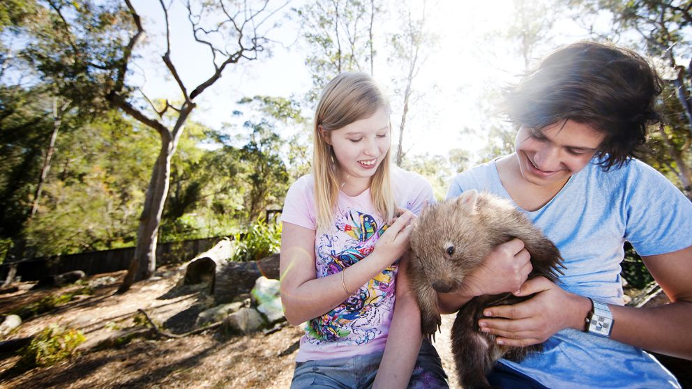 Young boy and girl handling a wombat at the Australian Reptile Park in Central Coast