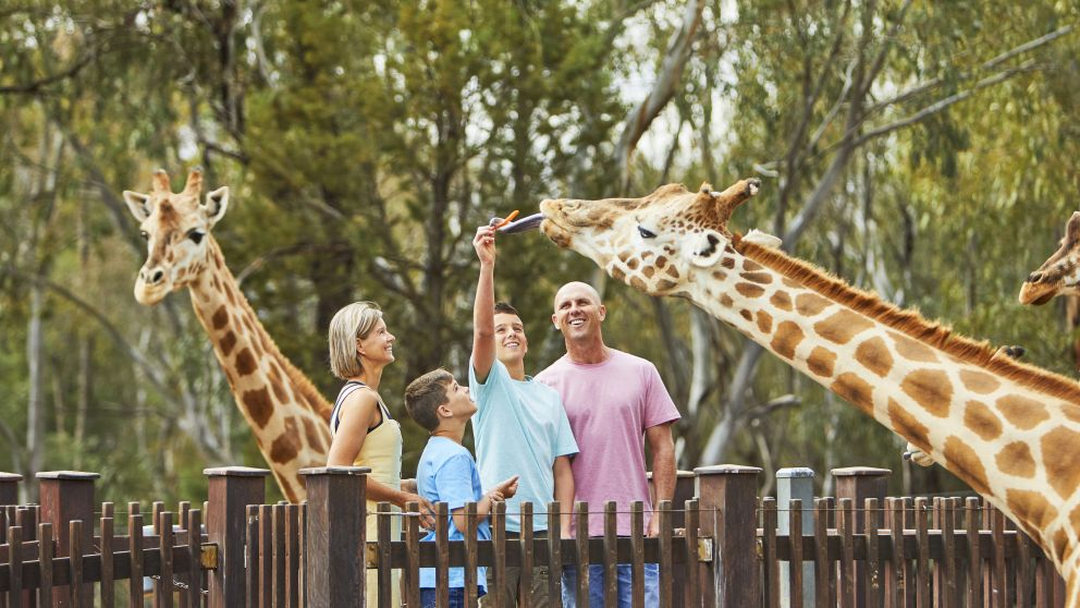 Family feeding a giraffe at the Taronga Western Plains Zoo, Dubbo