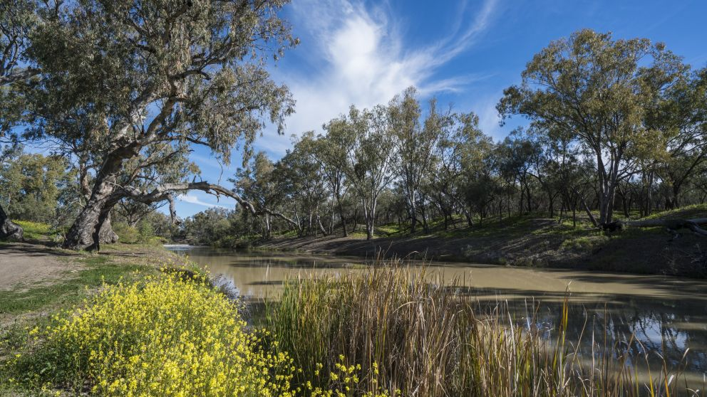 The scenic Namoi River in Walgett, Outback NSW