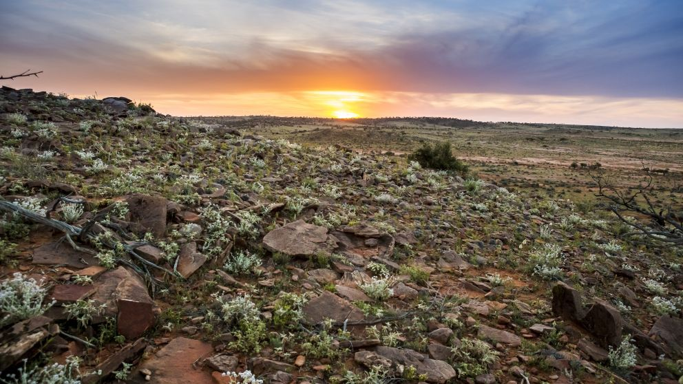 The sun sets on a dramatic desert landscape in Corner Country, far western NSW
