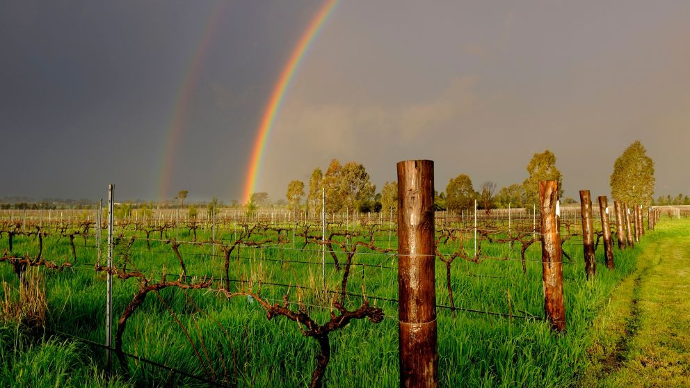 Rosnay Organic Farms and Vineyard in Cowra, Country NSW