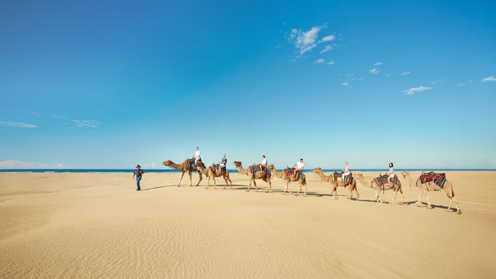 Adventure camel rides at Stockton Sand Dunes, Port Stephens.