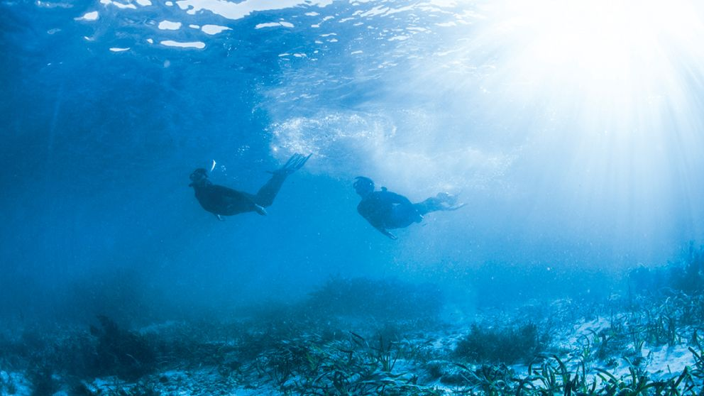 Shellharbour Diving & Snorkelling - South Coast NSW ...