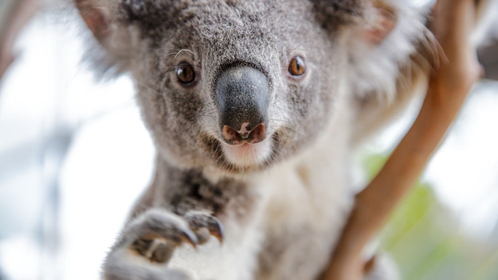 Wild Life Sydney Zoo - a free education resource portal